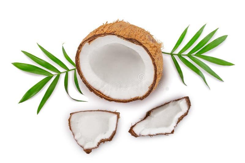 Coco con las hojas aisladas en el fondo blanco Visión superior Endecha plana ilustración del vector