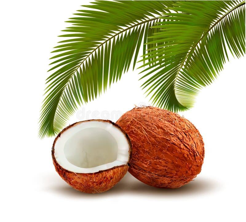 Coco con las hojas de palma libre illustration
