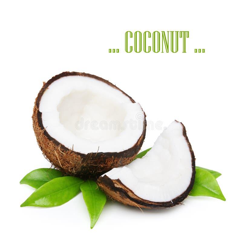Coco con las hojas verdes imagen de archivo libre de regalías
