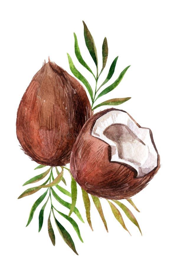 Coco da aquarela no fundo branco ilustração do vetor