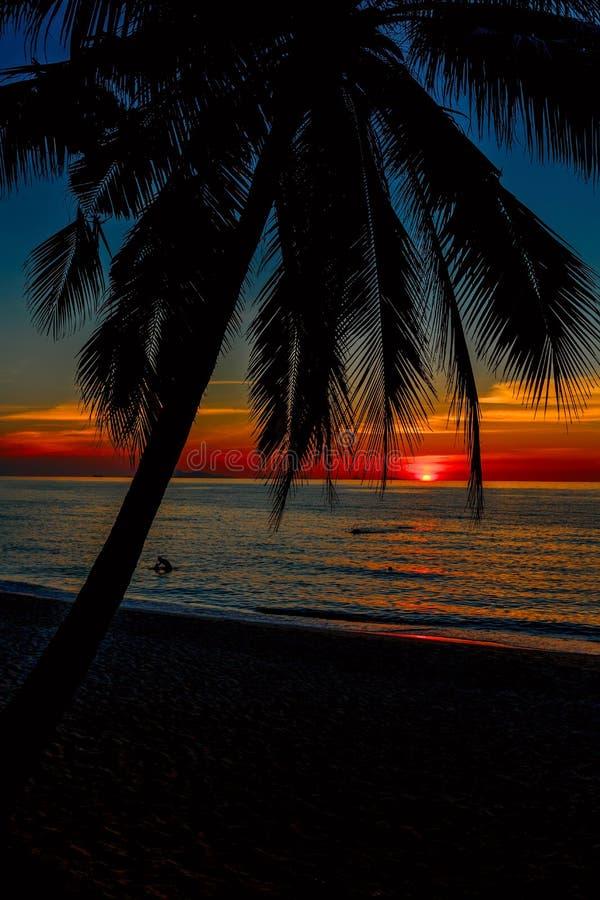 Coco da palma da praia do por do sol do mar imagem de stock