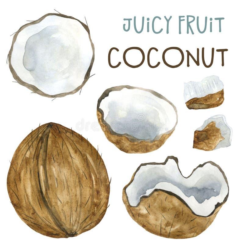 Coco de desenho de aquarela e pedaços de coco ilustração do vetor