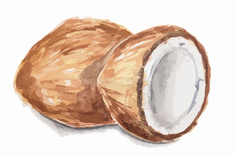 Coco de la acuarela stock de ilustración