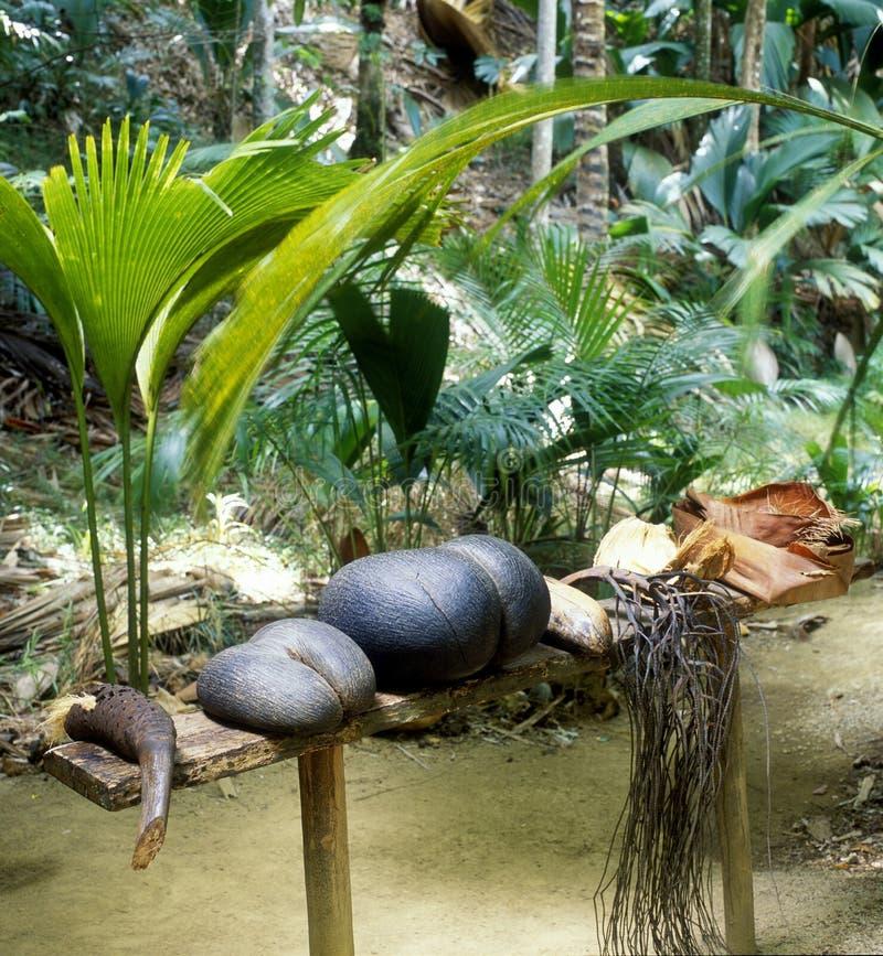 Coco-de-mer imagen de archivo libre de regalías