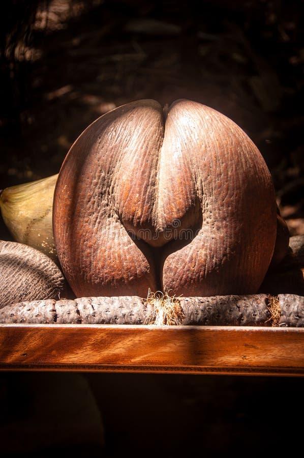 Coco de Mer fotografia stock libera da diritti