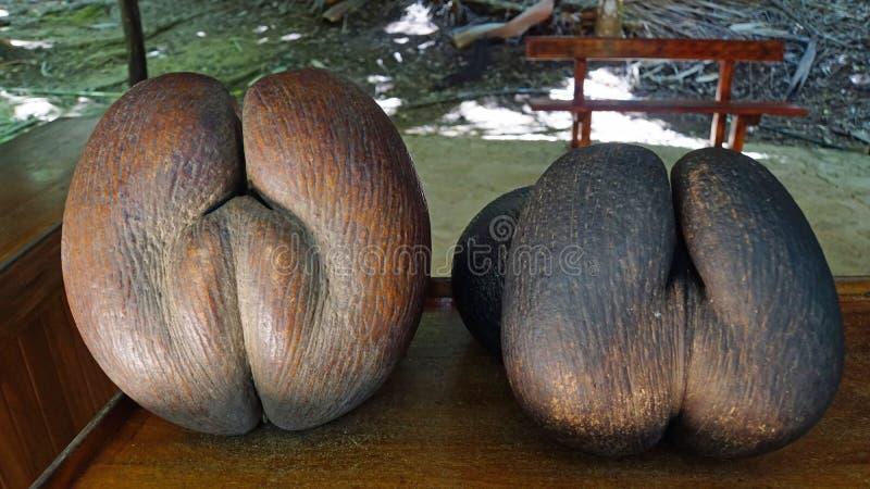 Coco de Mer fotografia stock