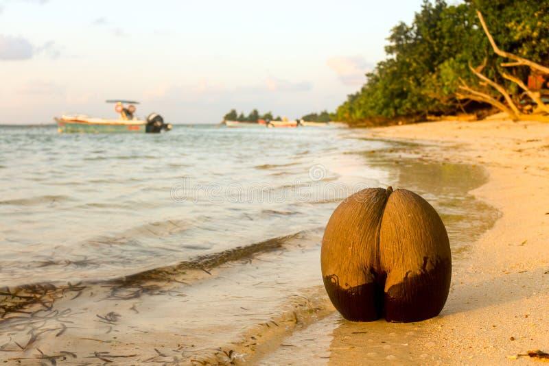 Coco de Mer fotografie stock