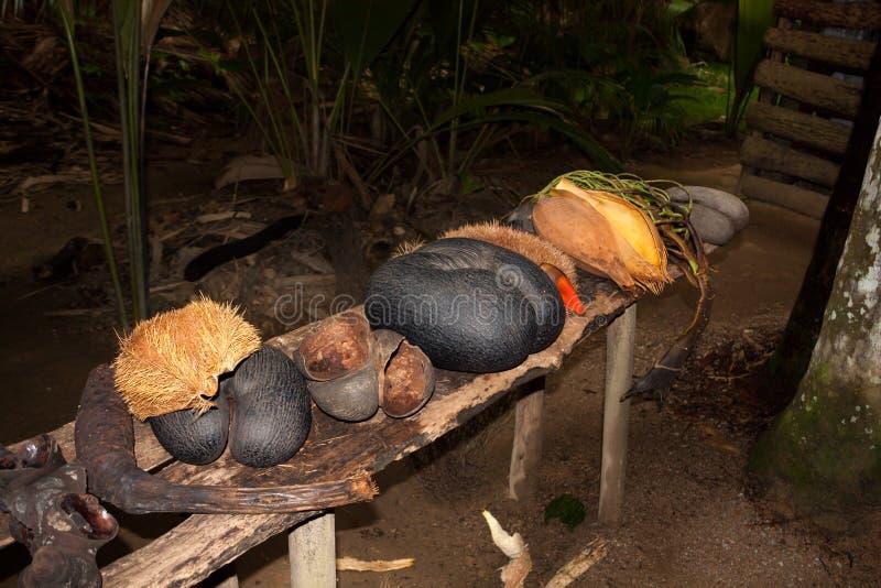 Coco de Mer Nut στοκ εικόνες