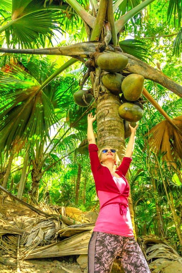 Coco de Mer palm tree royalty free stock image