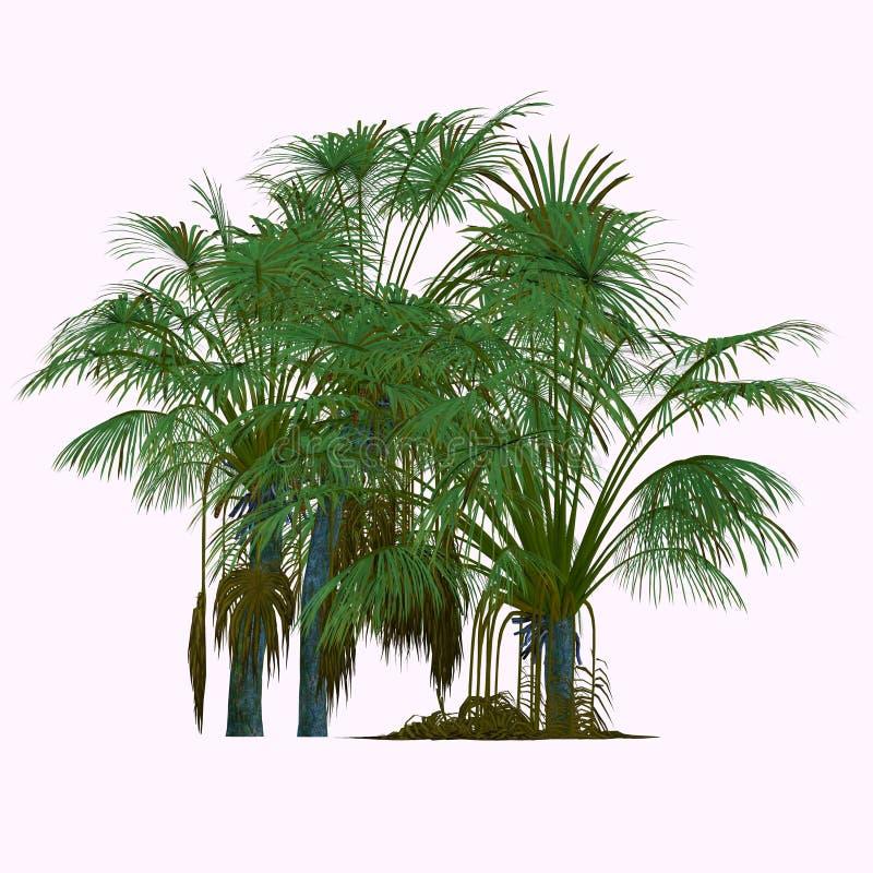Coco de Mer Tree ελεύθερη απεικόνιση δικαιώματος