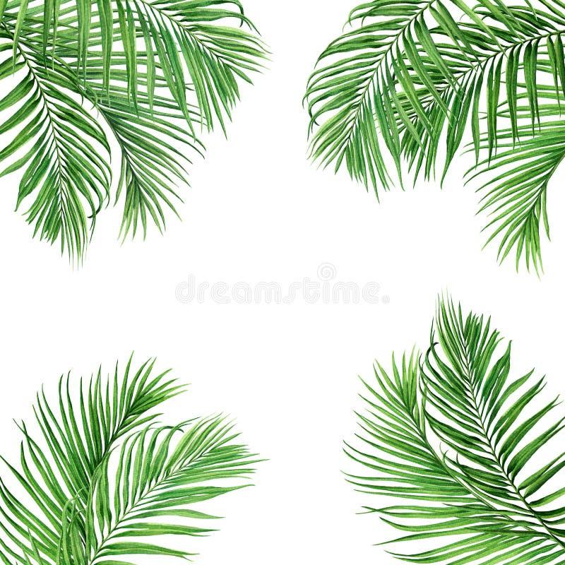 Coco del marco de la pintura de la acuarela, hojas de hoja de palma, verdes aisladas en el fondo blanco Mano de la acuarela tr?pi stock de ilustración