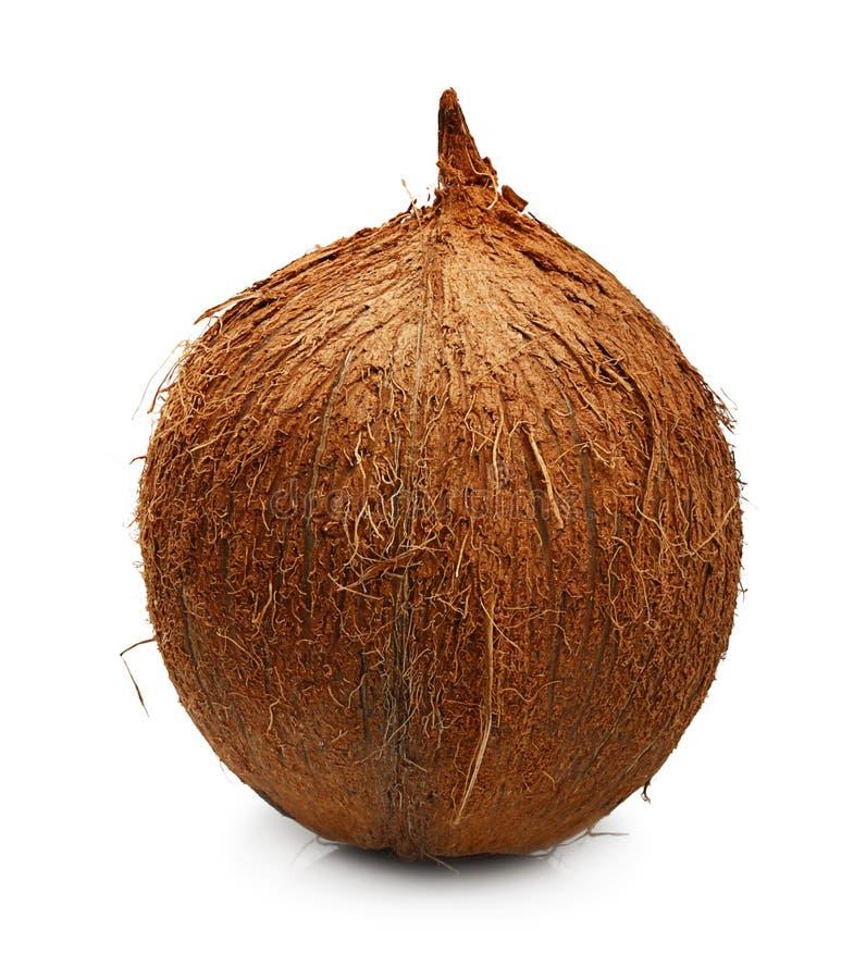 Coco do fruto tropical isolado fotografia de stock