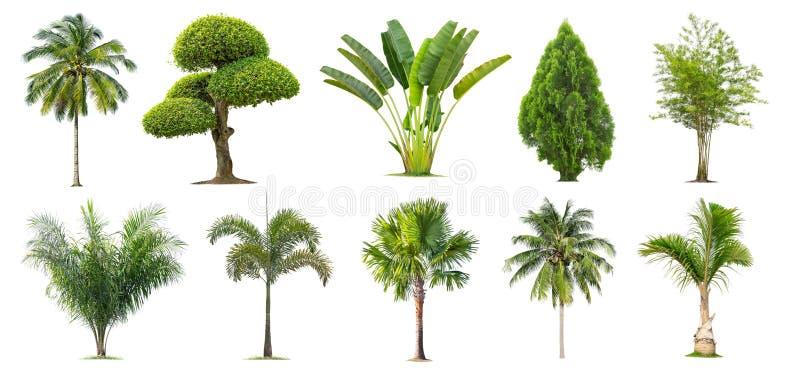 Coco e palmeiras, bambu, banana, Tako, árvore isolada no fundo branco, imagens de stock royalty free