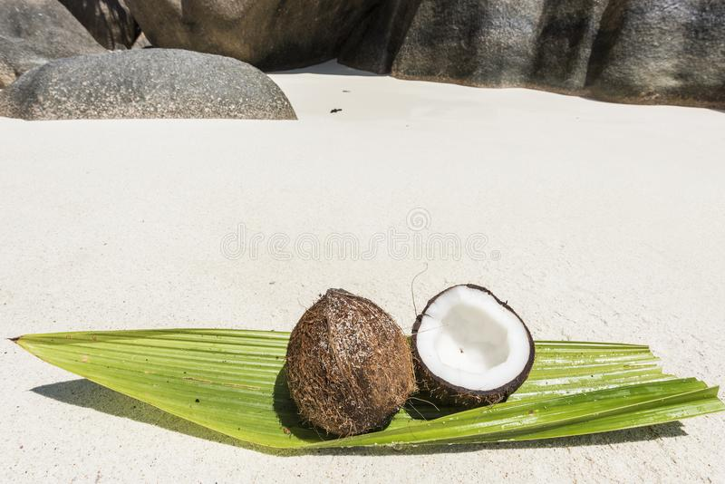 Coco em Seychelles imagens de stock
