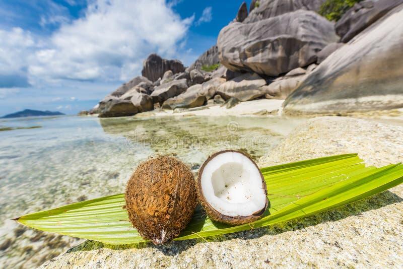 Coco em Seychelles fotografia de stock