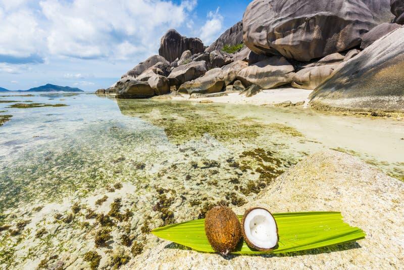 Coco em Seychelles imagem de stock
