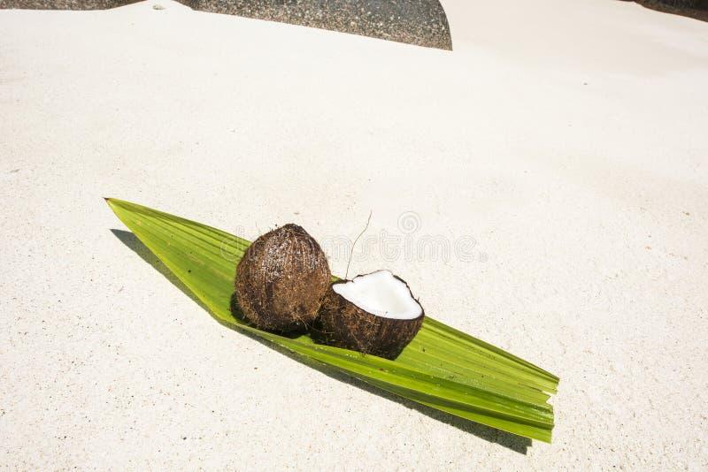 Coco em Seychelles imagens de stock royalty free