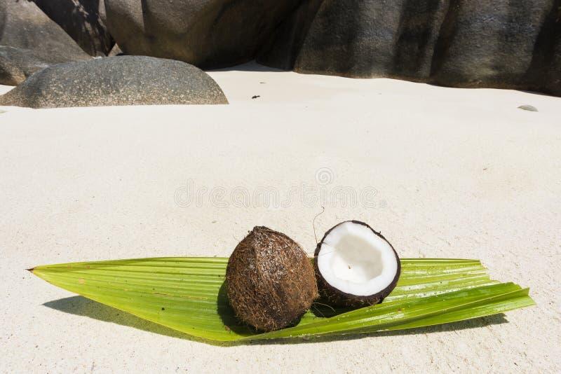Coco em Seychelles foto de stock