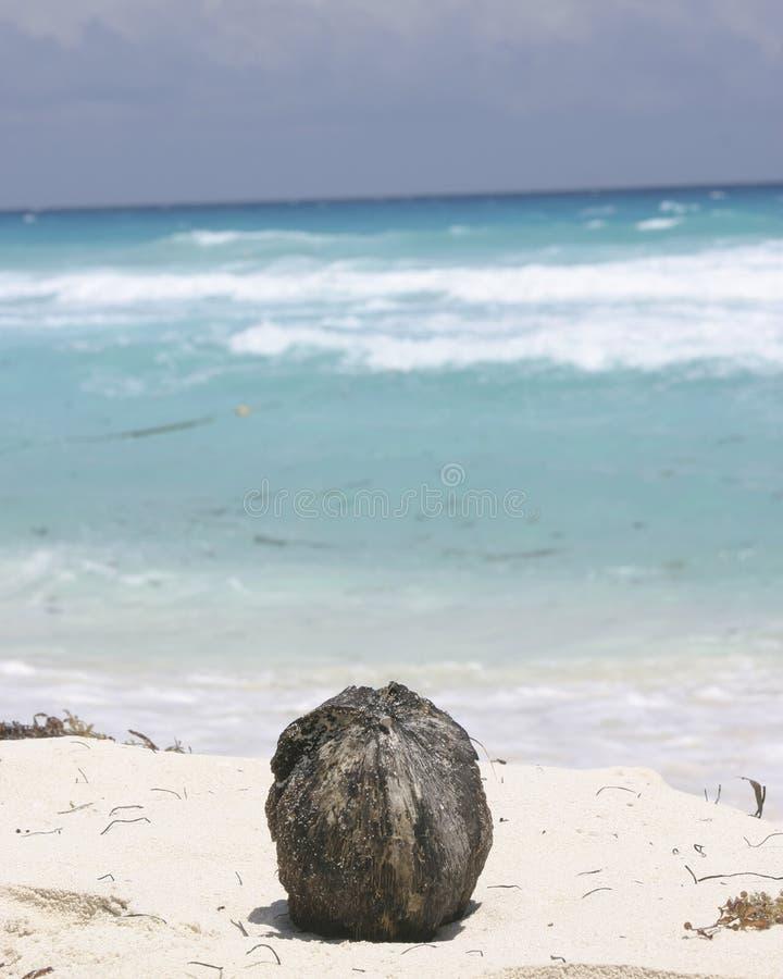 Download Coco en la playa imagen de archivo. Imagen de exótico, fruta - 180879