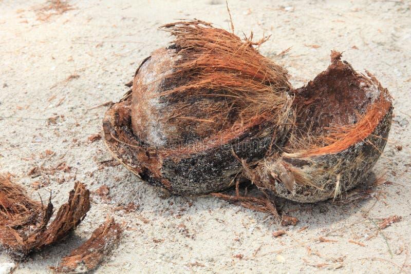 Coco en la playa fotografía de archivo libre de regalías