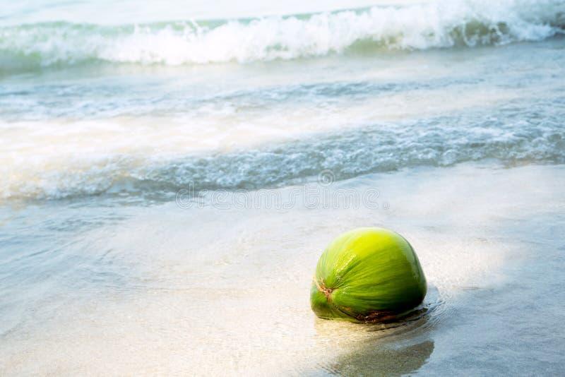 Download Coco en la playa tropical foto de archivo. Imagen de sunlight - 42430750