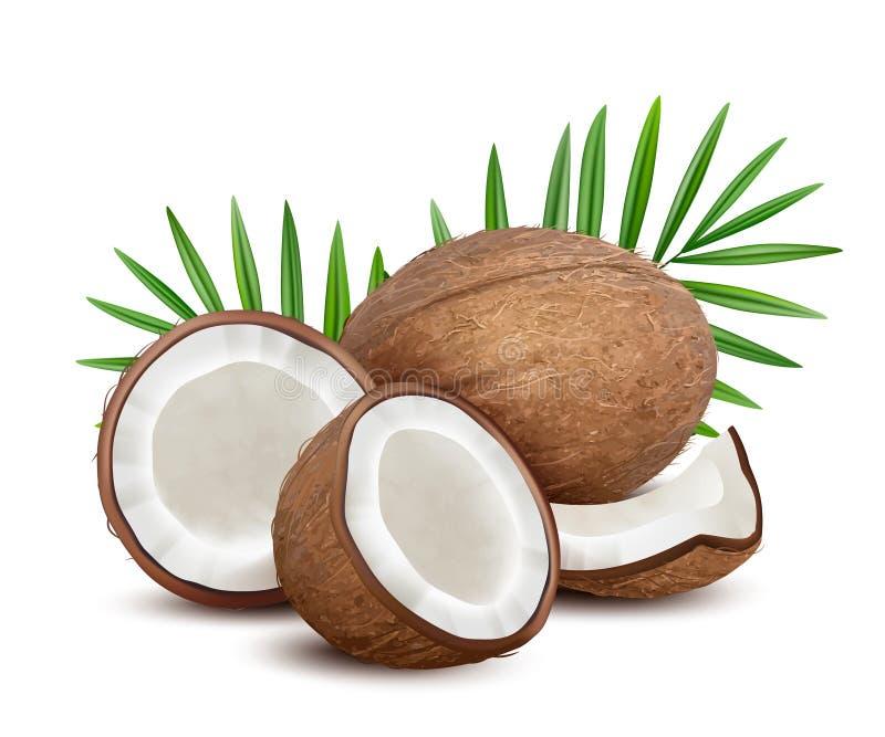 coco Fruta abierta tropical fresca de los Cocos con el postre natural del vector de las hojas del verde de la leche y de la palma libre illustration