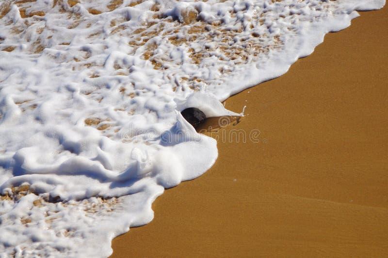 Coco lanzado en la resaca de la playa Puerto Rico de Jobos imagenes de archivo