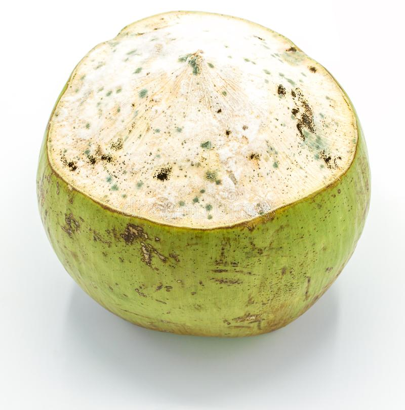 Coco mohoso aislado en el fondo blanco, primer imagenes de archivo