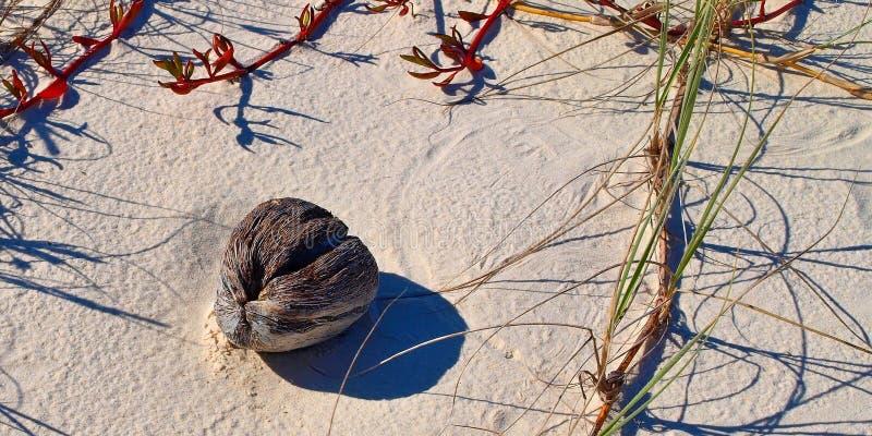 Coco náufrago en una playa tropical arenosa blanca prístina de la isla fotos de archivo