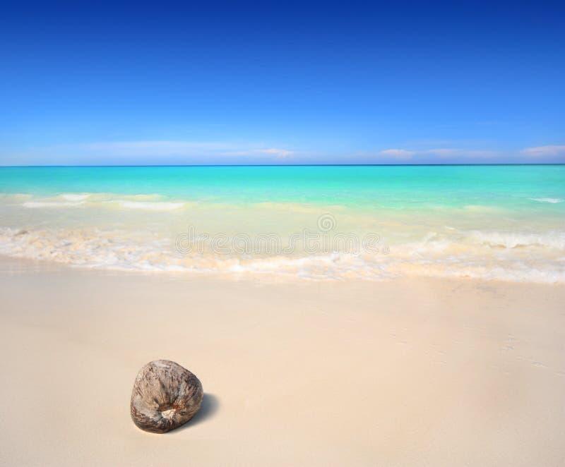 Coco na praia imagens de stock
