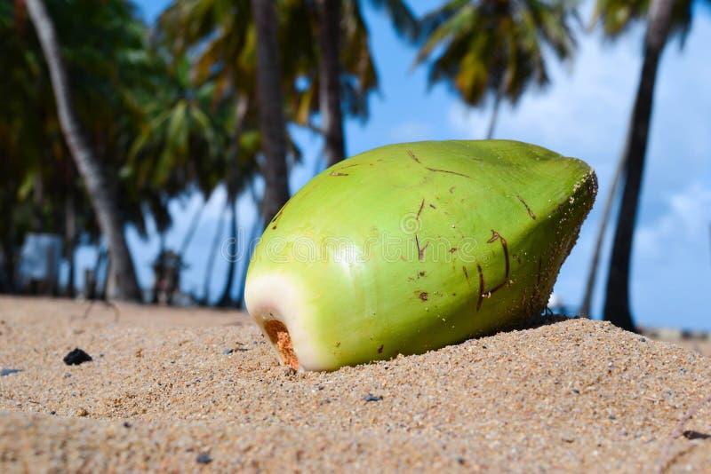 Coco na praia de Porto Rico fotos de stock