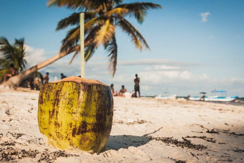 Coco na praia em Playa Paraiso, Tulum, Quintana Roo, Mexi imagem de stock royalty free