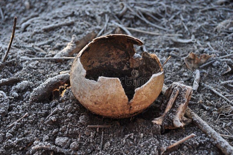 Coco natural que biodegrada no solo e no Frost fotos de stock royalty free