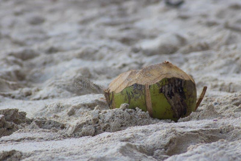 coco no fim do macro da areia da praia acima foto de stock royalty free