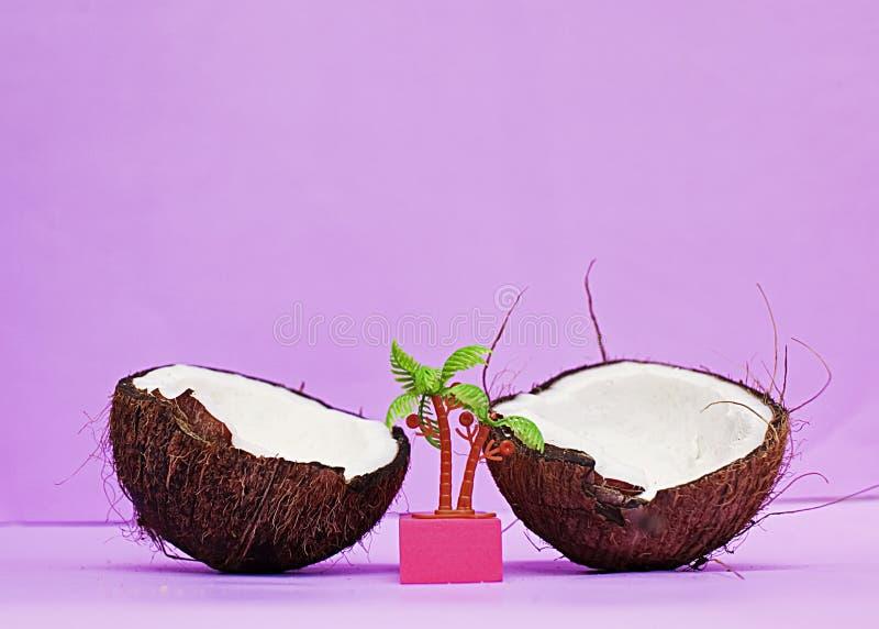 Coco, púrpura, palma, pulpa del coco imagen de archivo