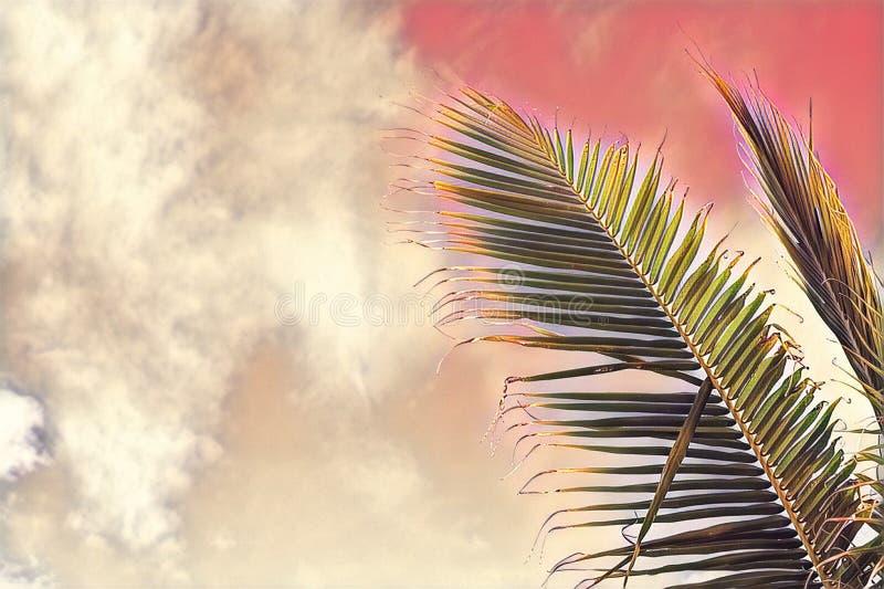 Coco palm tree leaf on sky background. Pink toned palm leaf on sunset sky. Tropical vacation digital illustration. royalty free illustration