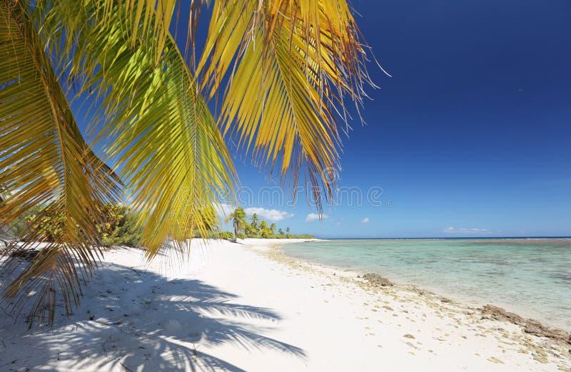 Coco palmy fronds nad białą piaskowatą plażą obraz royalty free