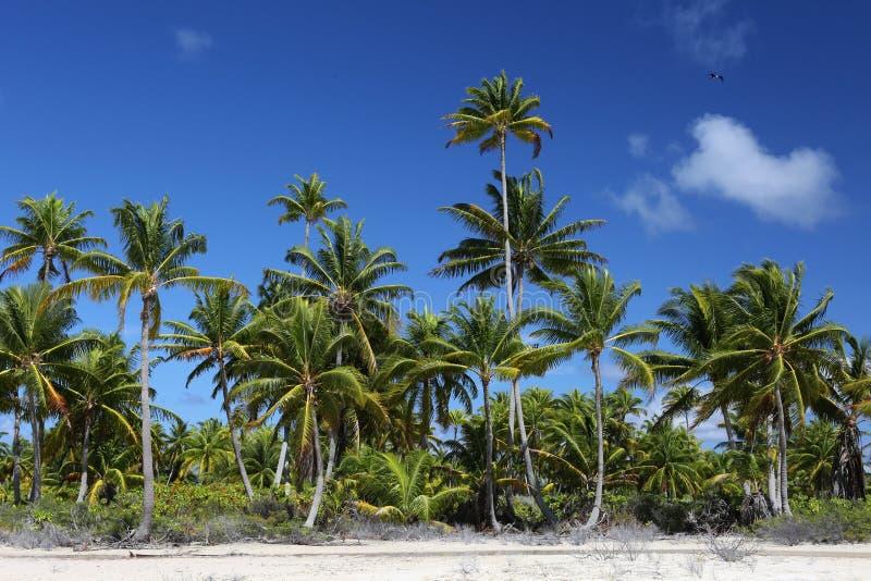 Coco palmy lasowe zdjęcie royalty free