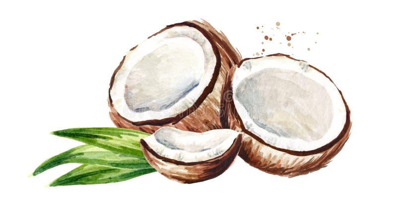 Coco rachado com folhas verdes Ilustração tirada mão da aquarela, isolada no fundo branco ilustração stock