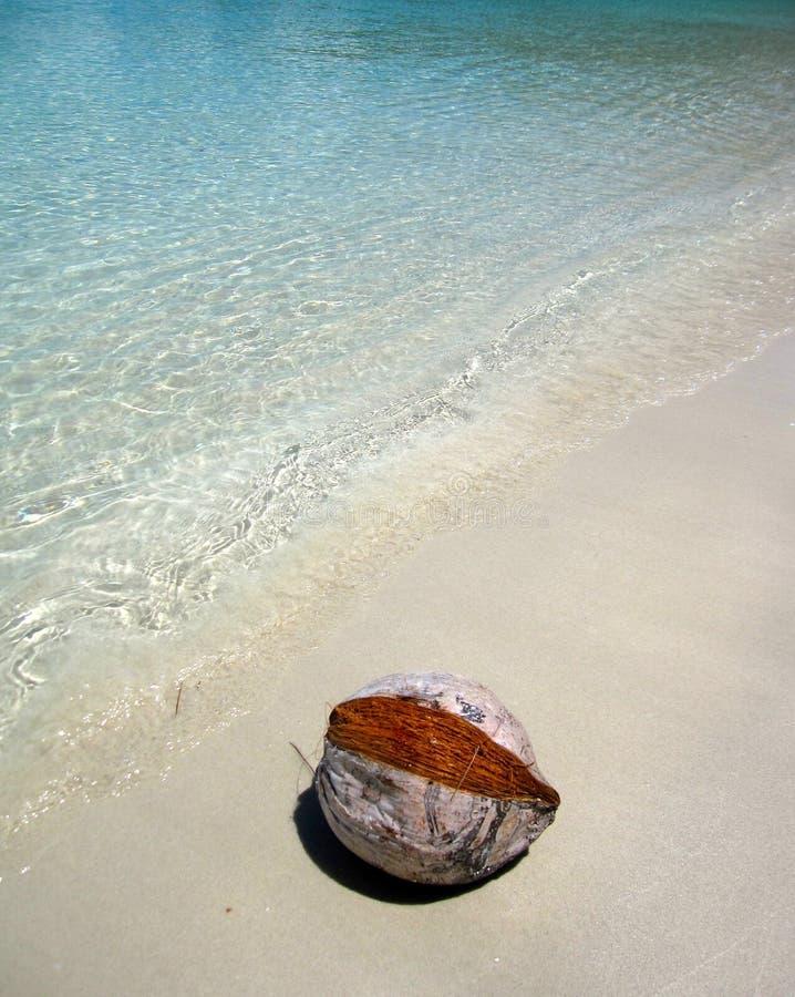 Coco seco en la playa blanca de la arena imagen de archivo libre de regalías