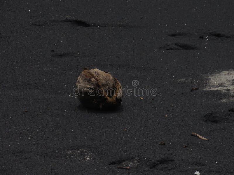 Coco sobre la arena negra imágenes de archivo libres de regalías