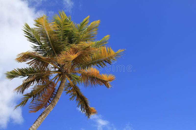 Coco-trees royalty free stock images