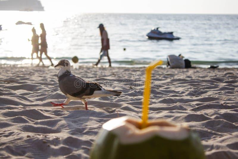 Coco verde fresco con un tubo en la arena blanca en la playa en Tailandia Cierre para arriba foto de archivo libre de regalías