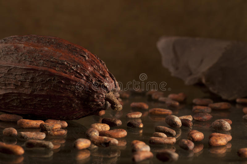Download Cocoa bean with chocolate stock photo. Image of descriptive - 23145894