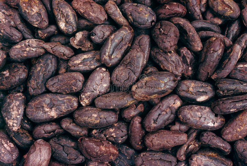 Cocoa beans - background royalty free stock image