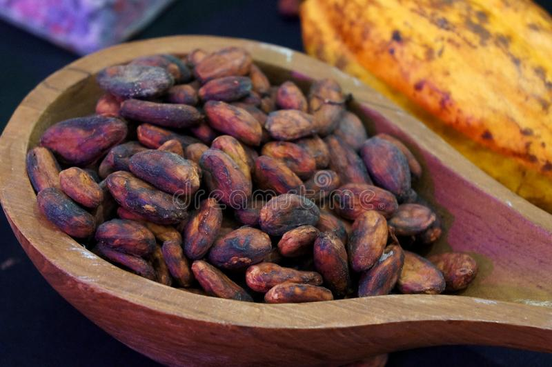 Close-up peeled cocoa beans in a wooden spoon. royalty free stock photography