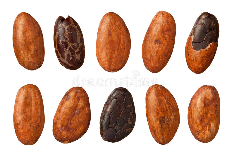 Cocoa Beans (with clipping path). Cocoa Beans isolated on white wth a clipping path. Isolation is on a transparent layer in the PNG format royalty free stock photography
