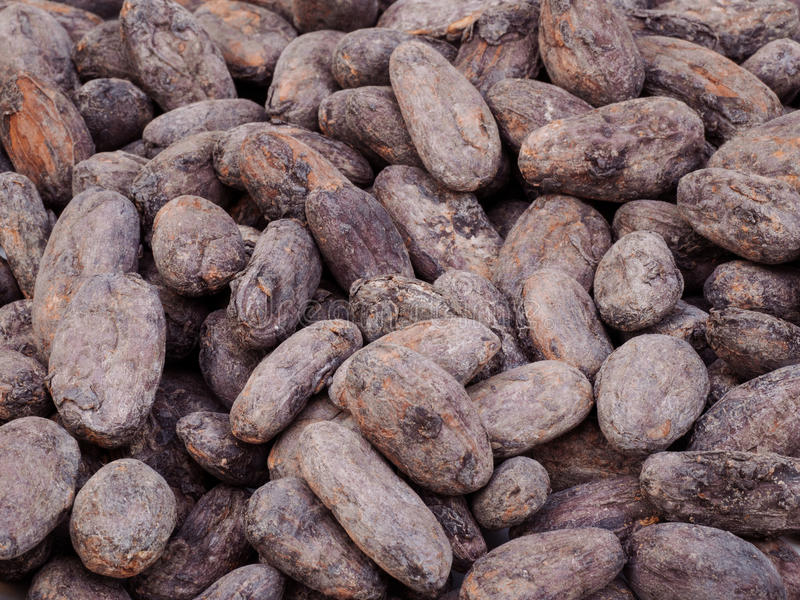 Cocoa beans. Macro image of cocoa beans stock images