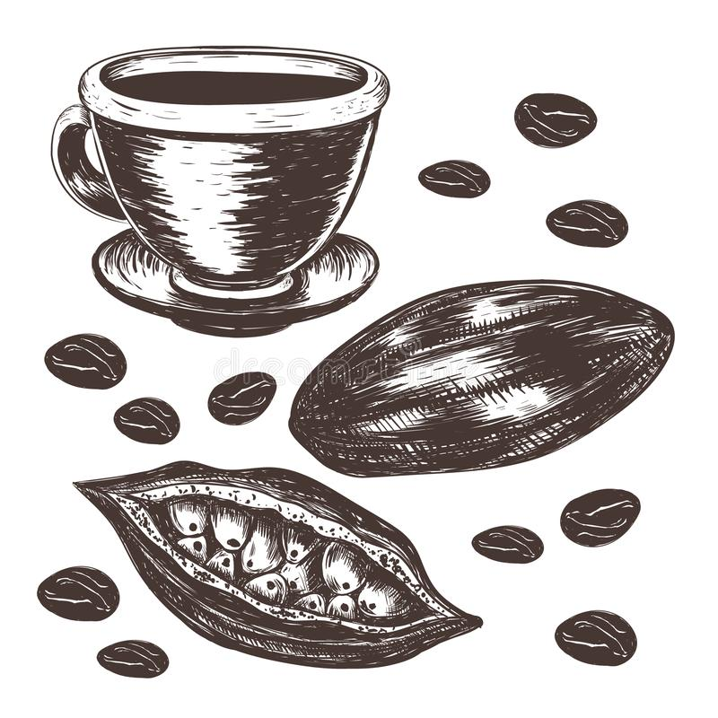 Cocoa beans, cocoa pod, cup of cocoa vector stock illustration