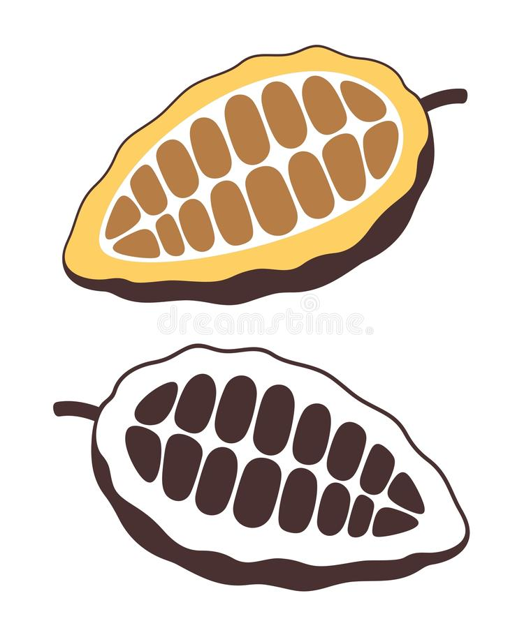 Cocoa beans. Vector royalty free illustration